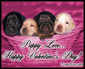 Click to get the codes for this image. This cute photo shows a pink basket with 4 puppies in it. The comment reads: Puppy Love... Happy Valentine's Day!