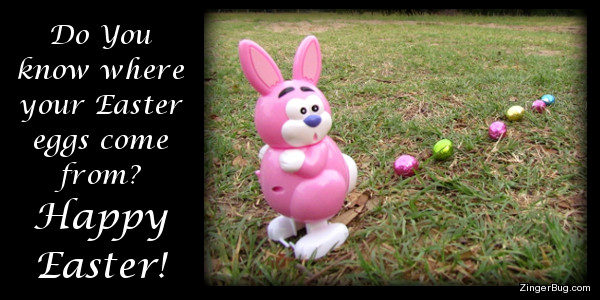 Click to get the codes for this image. This cute greeting features a photograph of a plastic bunny with a surprised look on its face. Behind the bunny is a trail of candy eggs in the grass. The caption reads: Do you know where your Easter eggs come from? Happy Easter!