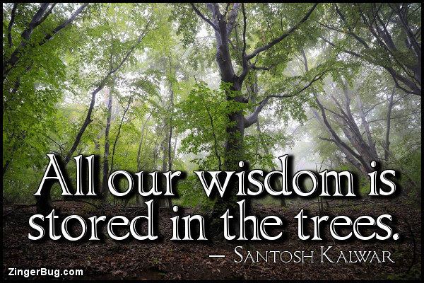 Click to get the codes for this image. All our wisdom is stored in the trees. ~ Santosh Kalwar